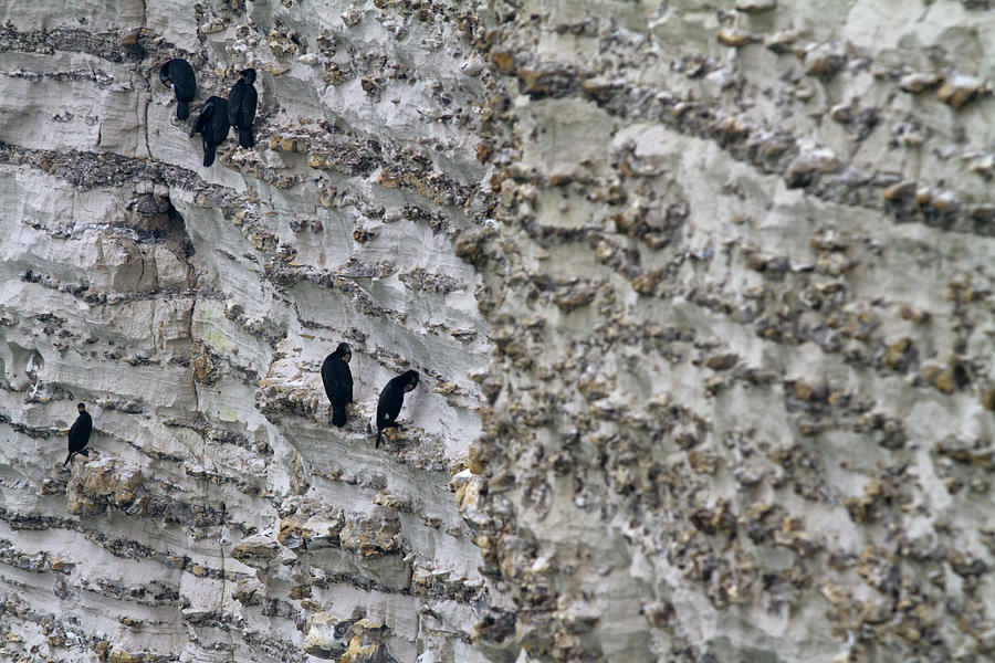 Birds On A Cliff Photograph by Fabrizio Cacciatore