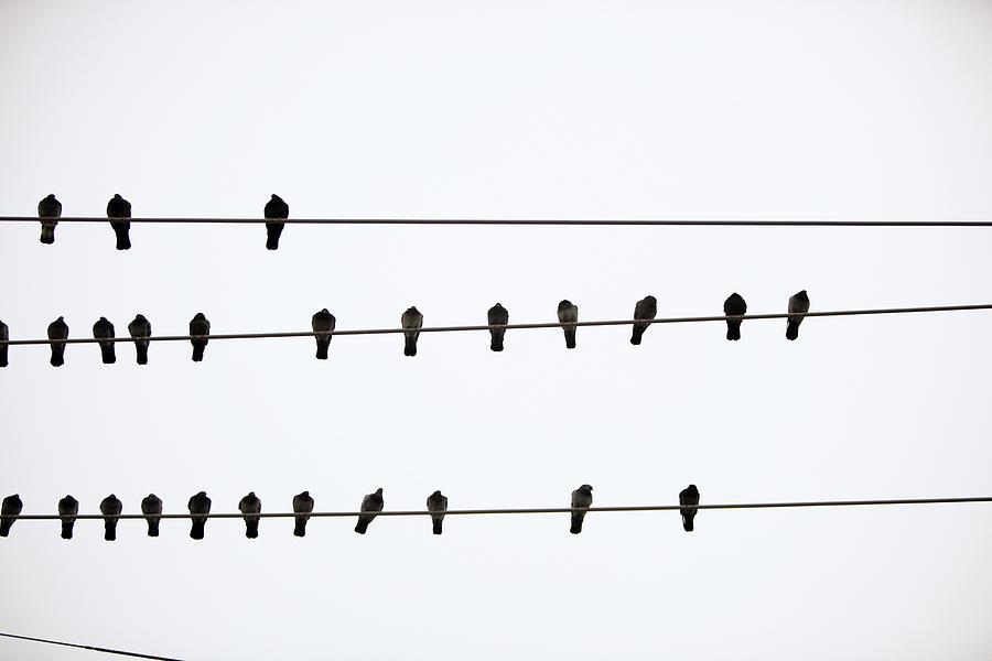 Αποτέλεσμα εικόνας για birds on a wire