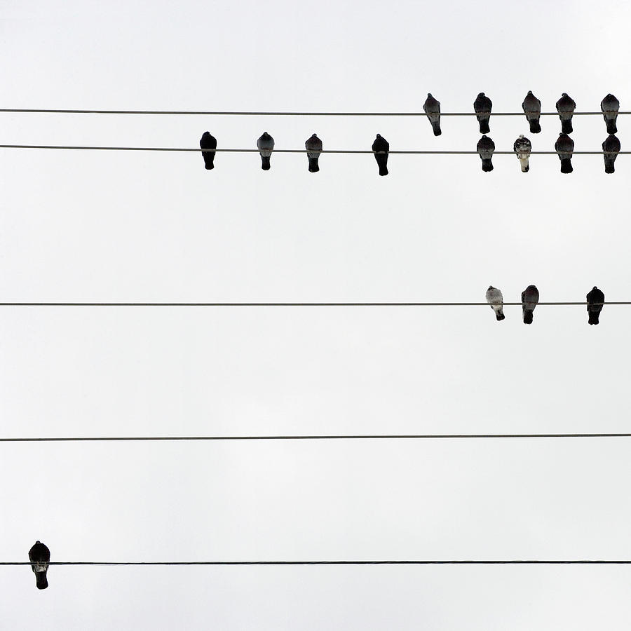 Birds On Electrical Wires Photograph by Kendall Mcminimy