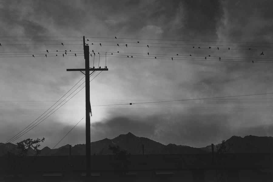 Birds On Wire, Evening Photograph by Buyenlarge