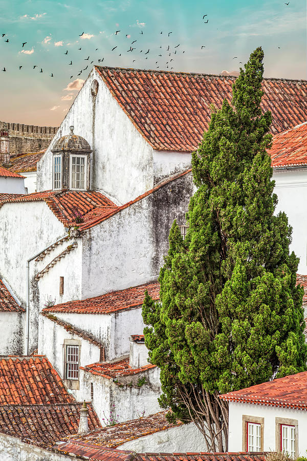 Birds Over Obidos by David Letts