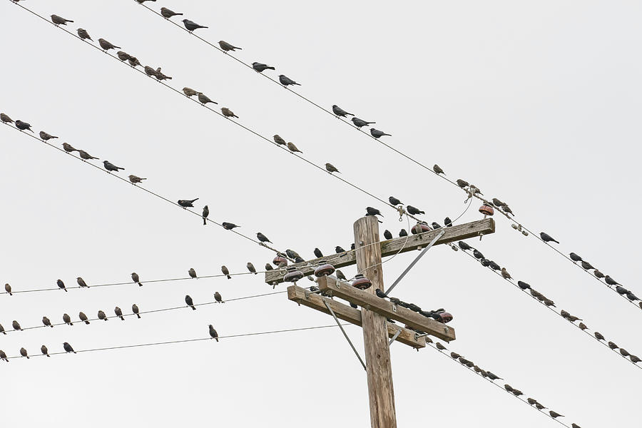 Birds Perched On Wires Photograph by David Madison