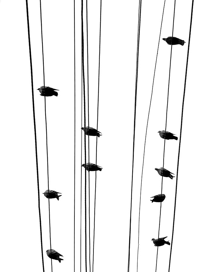 Birds Sitting on Wires by Prakash Ghai