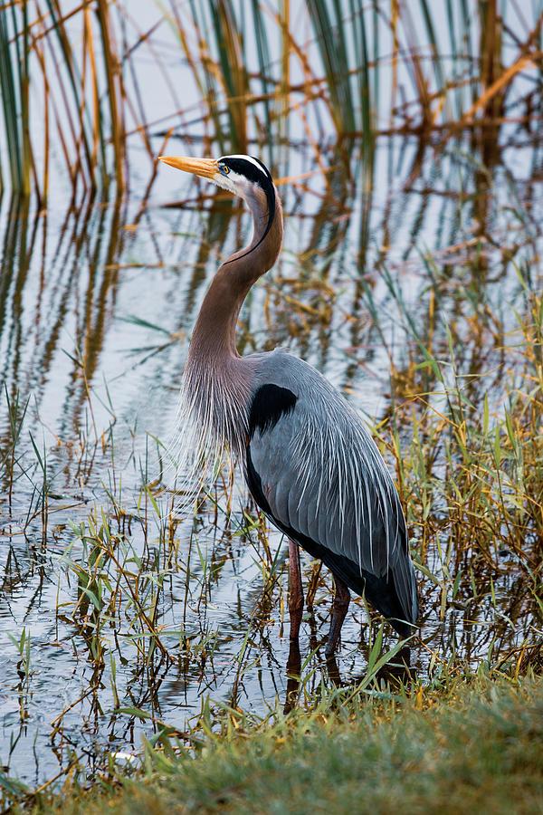 Birdseye 3 by Rick Cooper