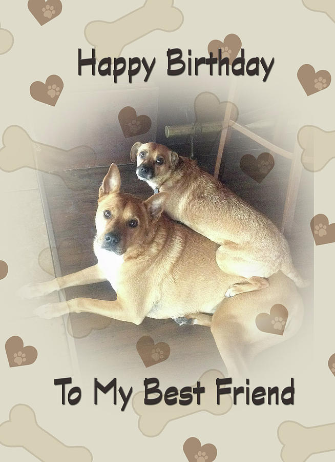 Birthday for Friend with two mixed breed dogs by Jacqueline Sleter