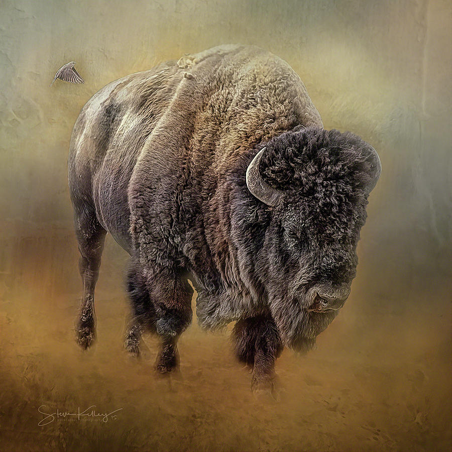 Bison and Friend by Steve Kelley