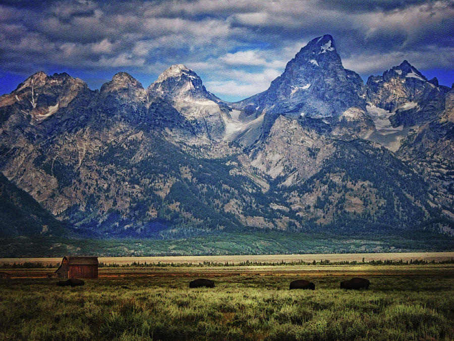 Bison and Mormon Barn by Jolynn Reed