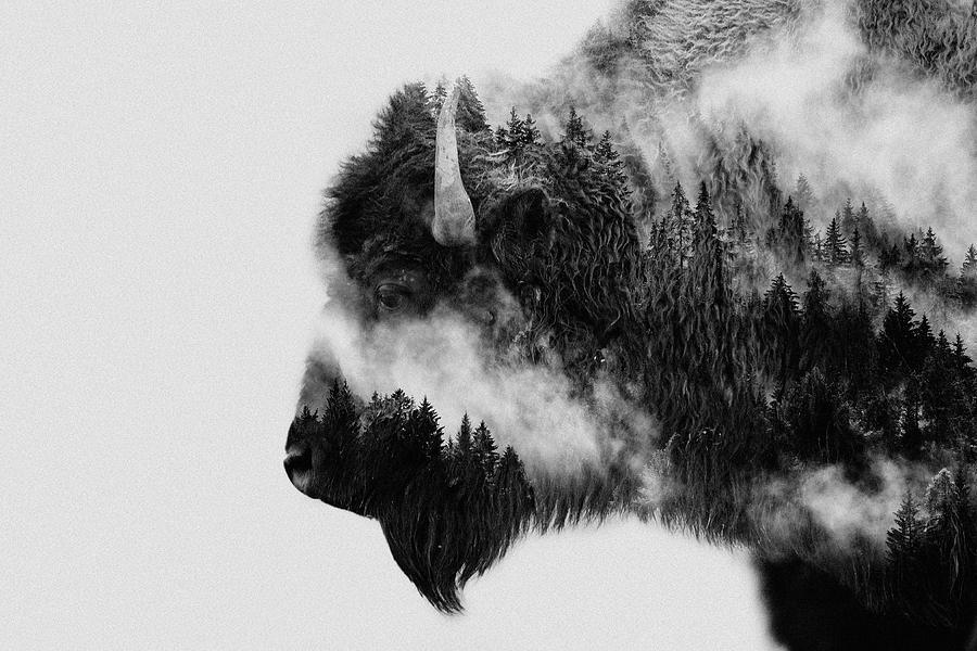 Bison Photograph - Bison by Angyalosi Beáta