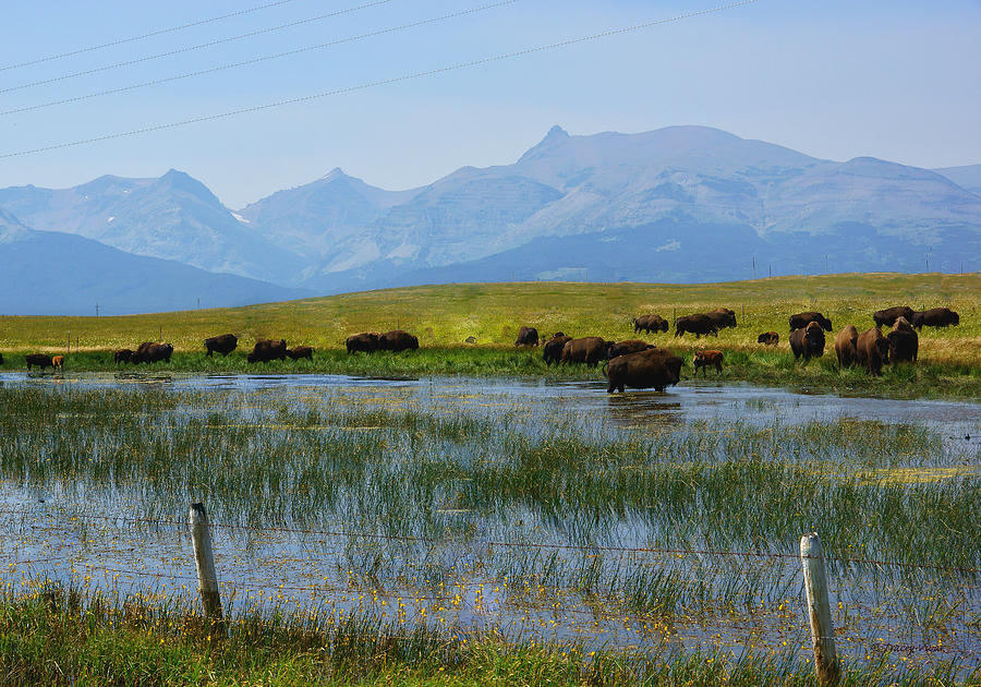 Bison Herd by a Lake Beneath Hazy Mountains by Tracey Vivar