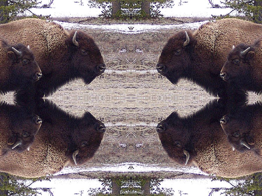Bison Mother and Calf Yellowstone Mirrored Textured by Enaid Silverwolf