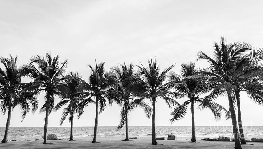 Palm Photograph - Black & White View Of Beautiful Beach by Wassana Mathipikhai