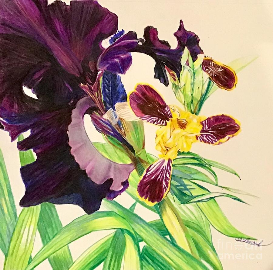 Black and Bumblebee Iris by Laurel Adams