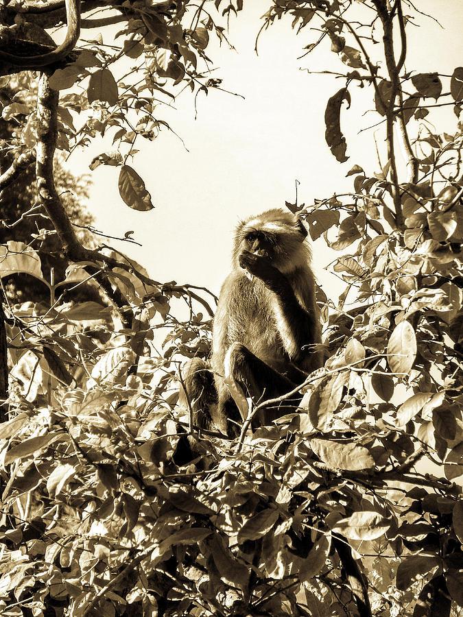 Black And White Ape Photograph