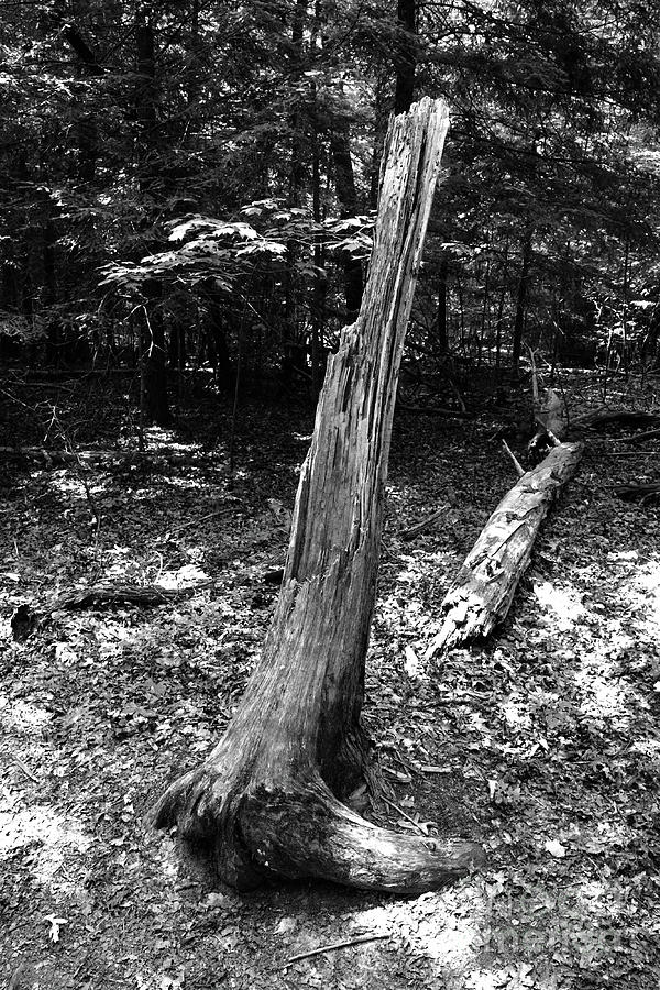 Black And White Fallen Tree by Phil Perkins