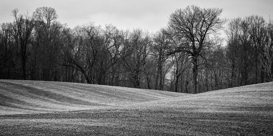Black and White Field by Matt Hammerstein