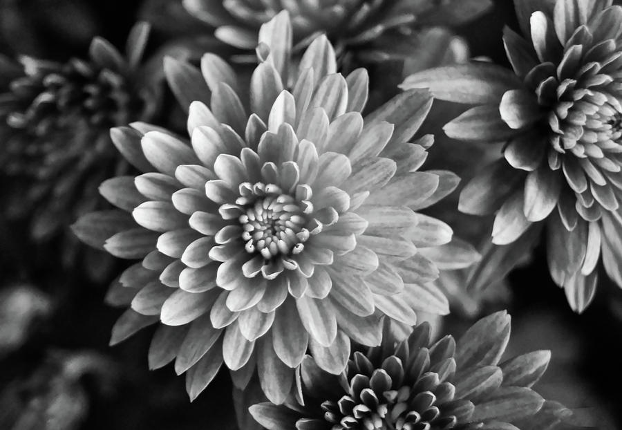 Black and White Flower by Suguna Ganeshan