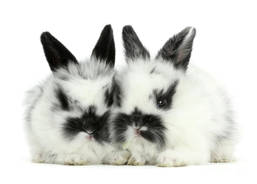 Black-and-white Love Bunnies by Warren Photographic