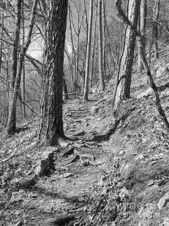 Black And White Photograph - Black And White Mountain Trail by Phil Perkins