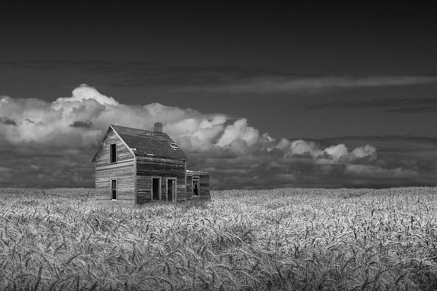 Black and White of an Old Abandoned Prairie Farm House in a Whea by Randall Nyhof