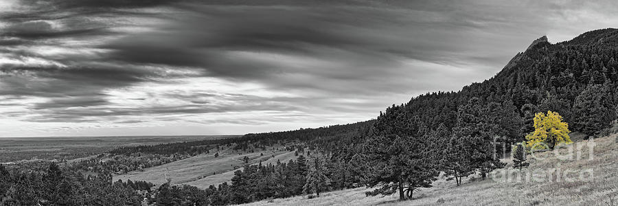 Black and White Panorama of Lonely Changing Cottonwood- Flagstaff Mountain Boulder Colorado by Silvio Ligutti