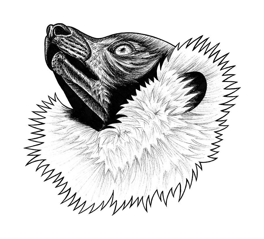 Lemur Drawing - Black And White Ruffed Lemur by Loren Dowding
