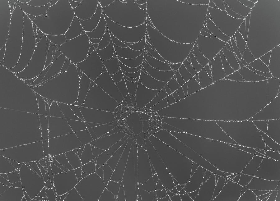 Black And White Spiderweb In Dew by Dan Sproul