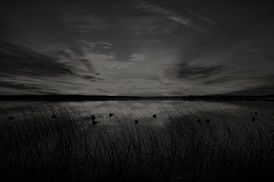 Black And White Sunrise Duck Hunt by Dale Kauzlaric