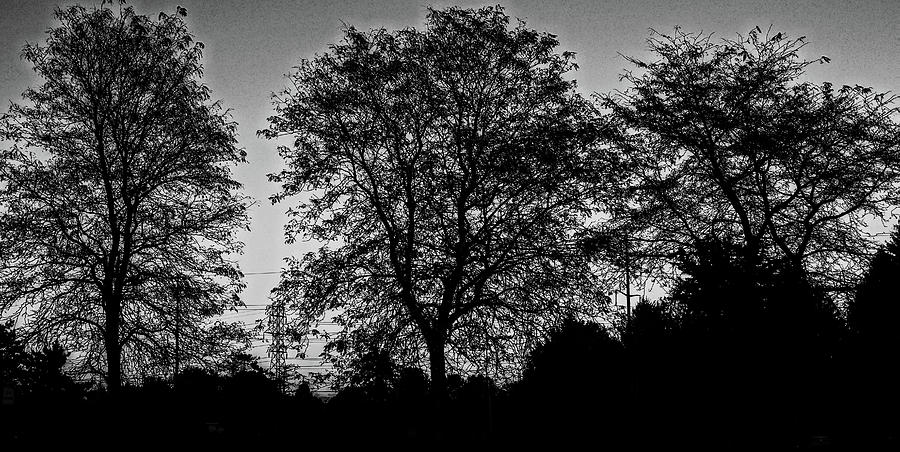 Black and white Tree line by Suguna Ganeshan