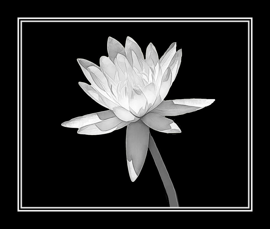 Water Lily Photograph - Black And White Water Lily by Rosalie Scanlon