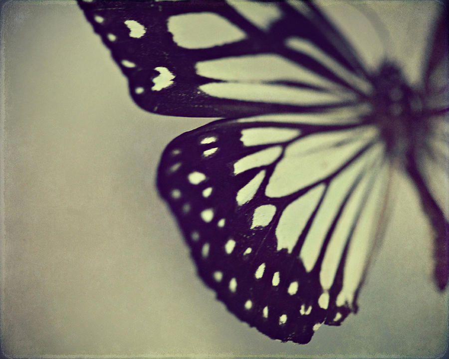 Black And White Wings Photograph by Amelia Kay Photography