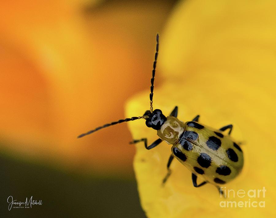 Black And Yellow Bug by Jennifer Mitchell