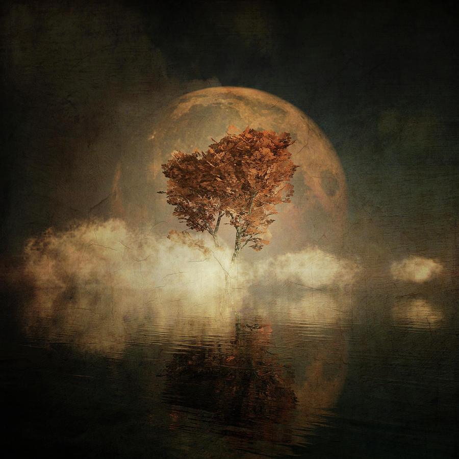 Black Ash with full moon in the mist by Jan Keteleer