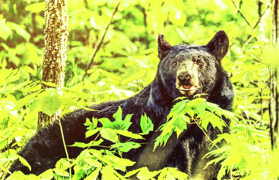Black Bear Grunge by Dan Sproul