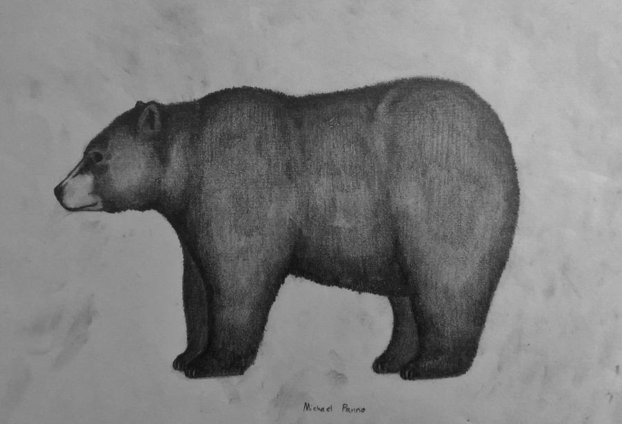 Black Bear Drawing