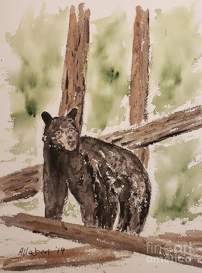 Black Bear by Stanton Allaben