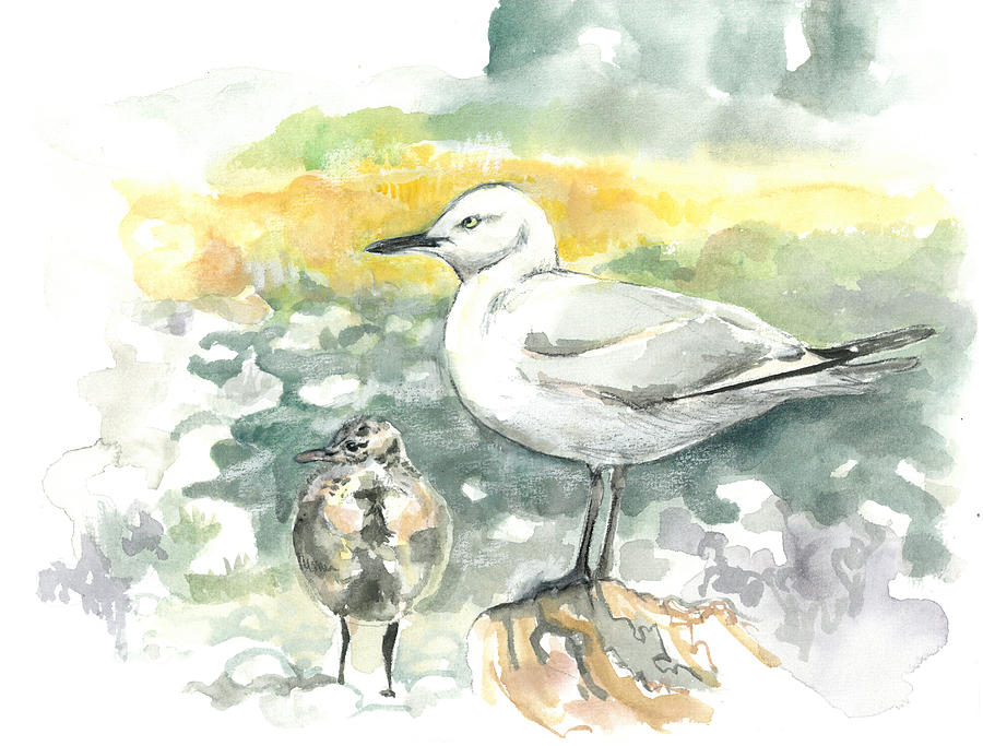 Black-billed Gull Family by Abby McBride