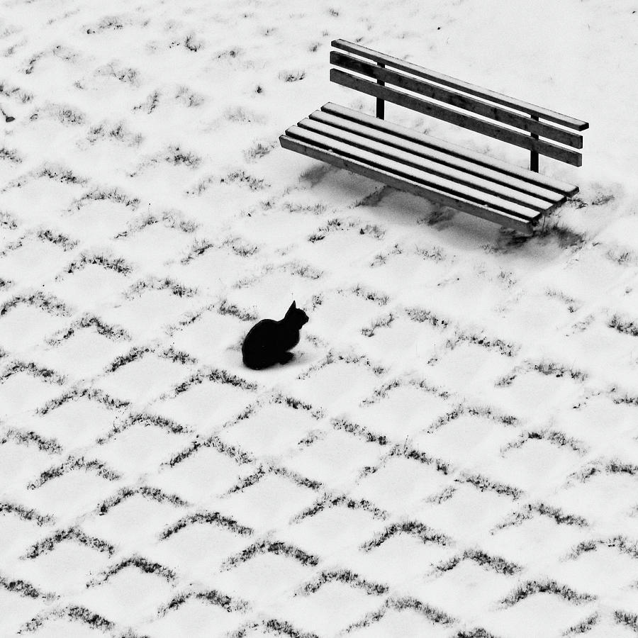 Black Cat Contemplating Bench Photograph by Photo By Marianna Armata