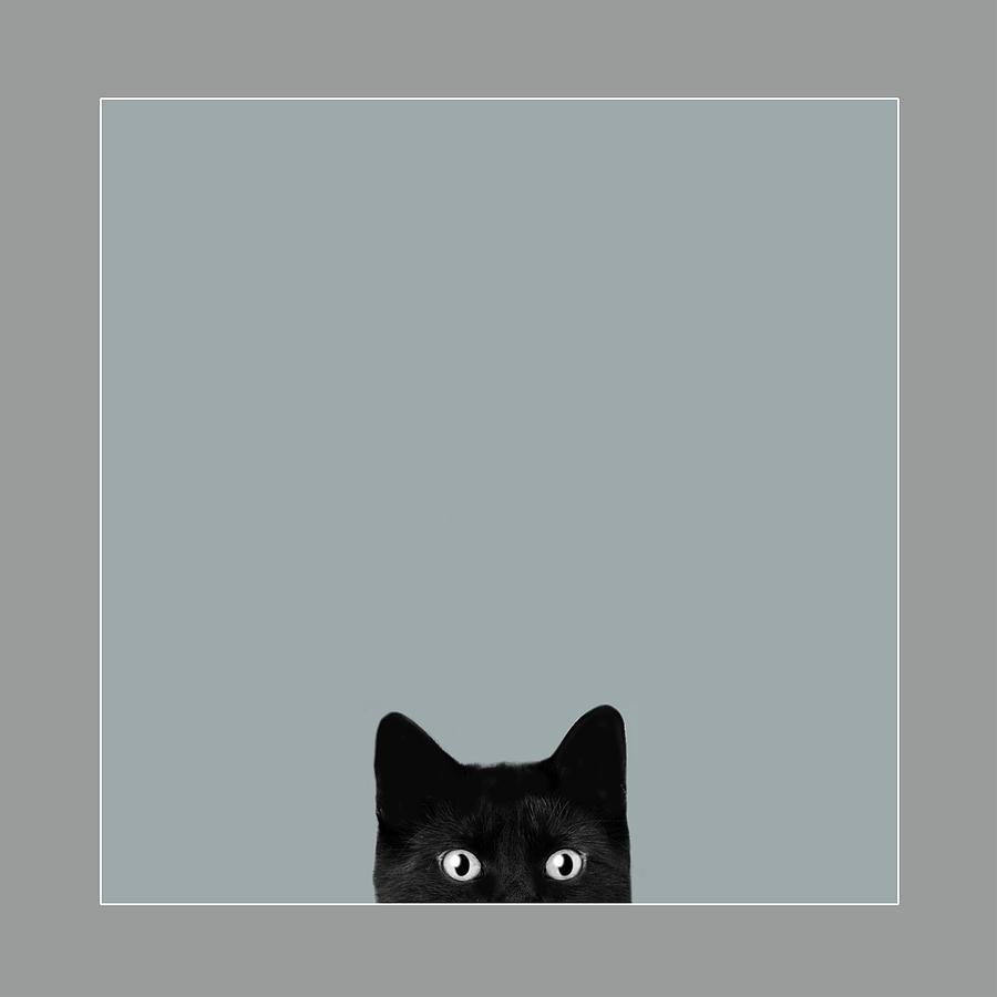 black cat by David Brookwell