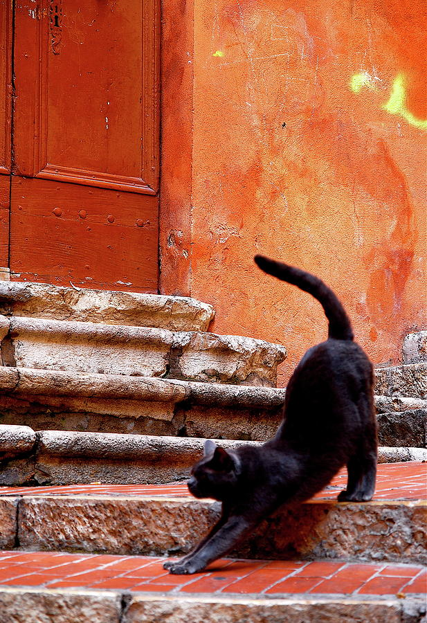 Black Cat Photograph by Roy Cheung