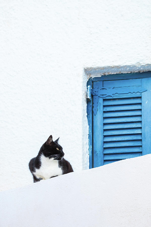 Black Cat Sitting Near Blue Shutter Photograph by Matteo Colombo