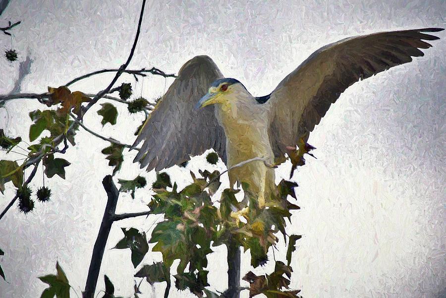 Black Crowned Night Heron Digital Art - Black Crowned Night Heron 1 Abstract Impression by Linda Brody