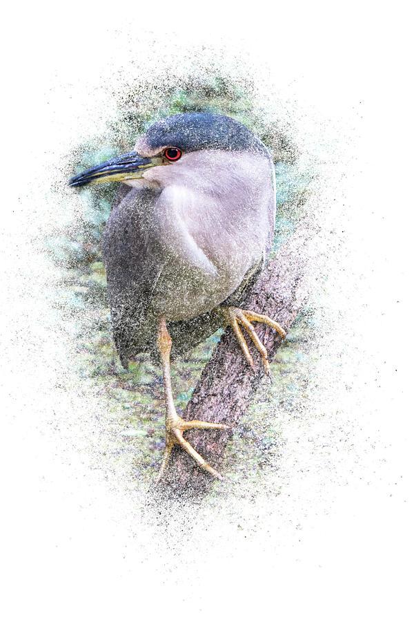 Black Crowned Night Heron - Vertical by Patti Deters