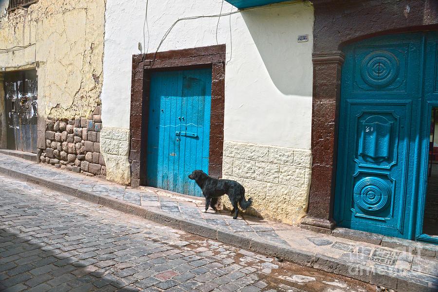 Black Dog in Cusco, Peru by Catherine Sherman