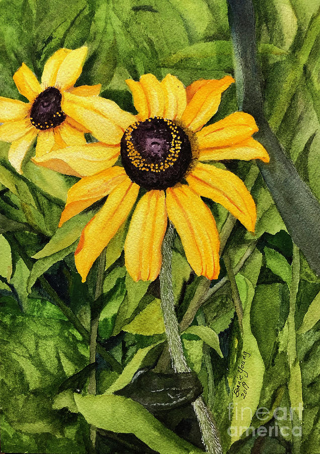 Black-Eyed Susans by Bonnie Young