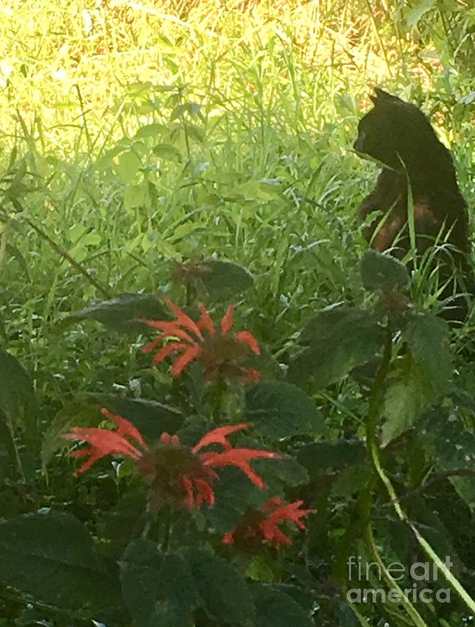 Black Cat Photograph - Black Farm Cat In The Wildflowers by Jeffrey Koss