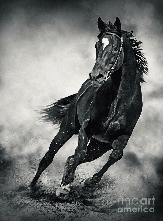 Black Horse Running Wild Black and White by Dimitar Hristov