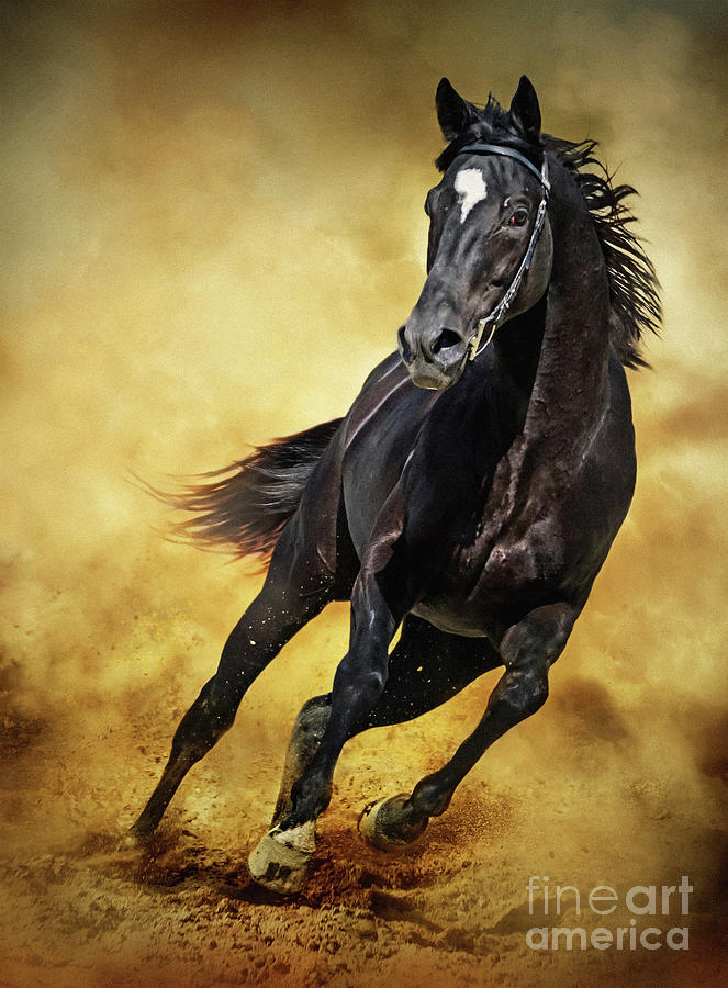 Black Horse Running Wild by Dimitar Hristov
