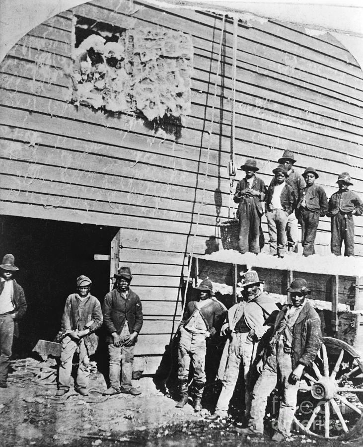 Black Men At Cotton Barn Photograph by Bettmann