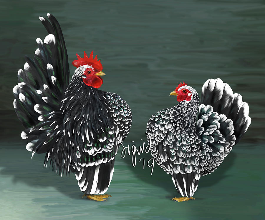 Chickens Digital Art - Black Mottled Serama Pair by Sigrid Van Dort