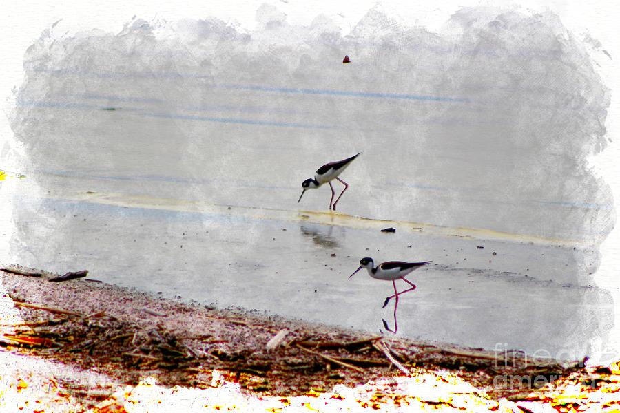 Watercolor Photograph - Black Neck Stilts at Salton Sea in Digital Watercolor by Colleen Cornelius